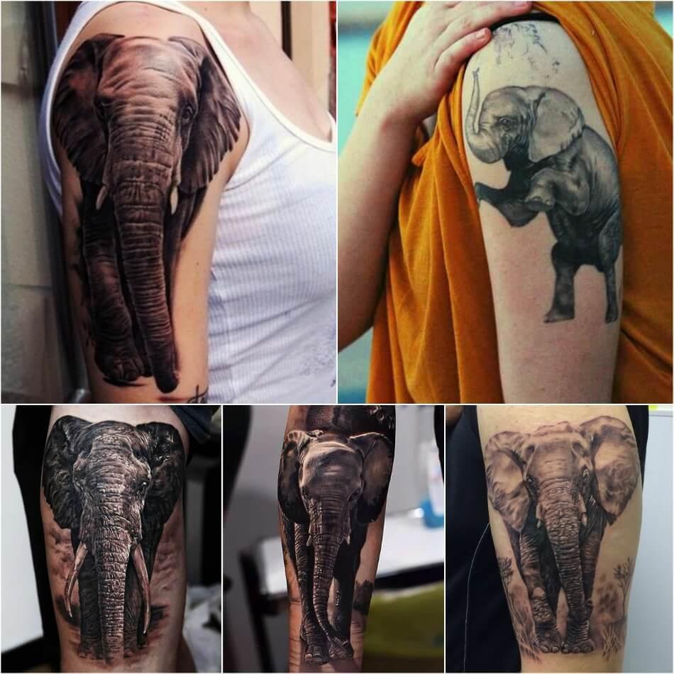Тату слон - Тату слон реализм - Татуировка слон реализм