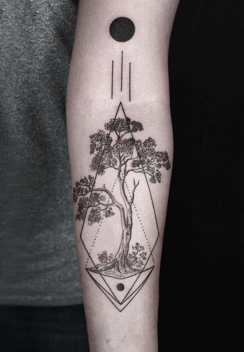Домашние цветы белый стрела